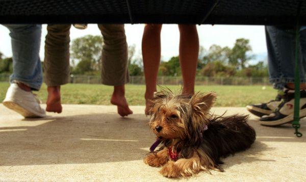 Hazel, a Yorkshire terrier, relaxes with her owners during Barktoberfest at the Fort Woof Dog Park in Gateway Park.