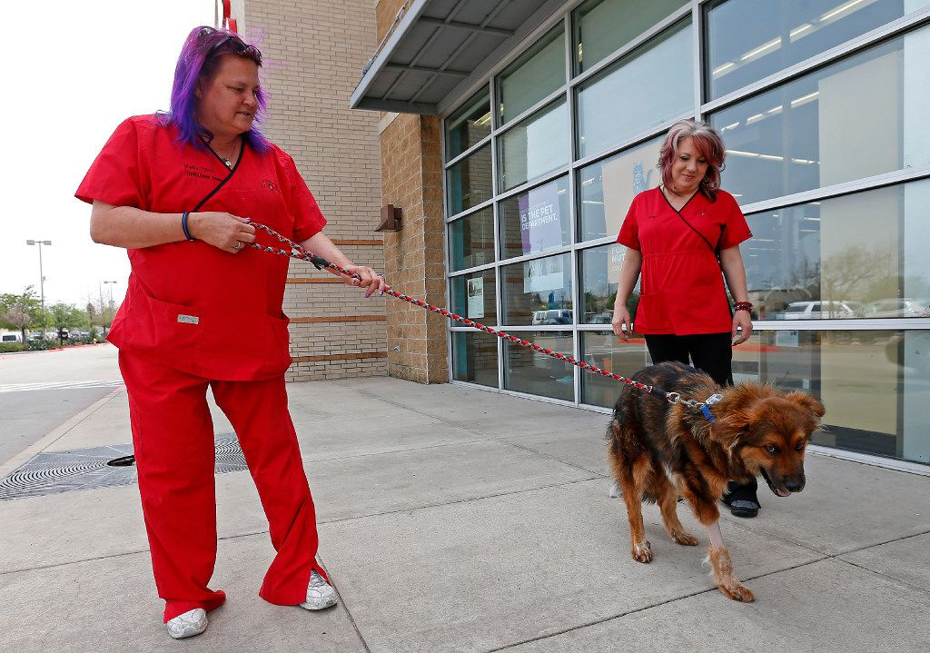 Kelly Lindstrom (left), a vet technician and animal cruelty investigator, walks Lt. Dan with Amy Cox at The Pet Vet in Frisco on Tuesday.