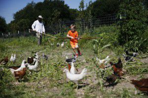 Trog Trogdon (left) and Jude Clem, 6, attempt to keep chickens away from a fence where at the Bonton Farms extension. (Andy Jacobsohn/Staff Photographer)