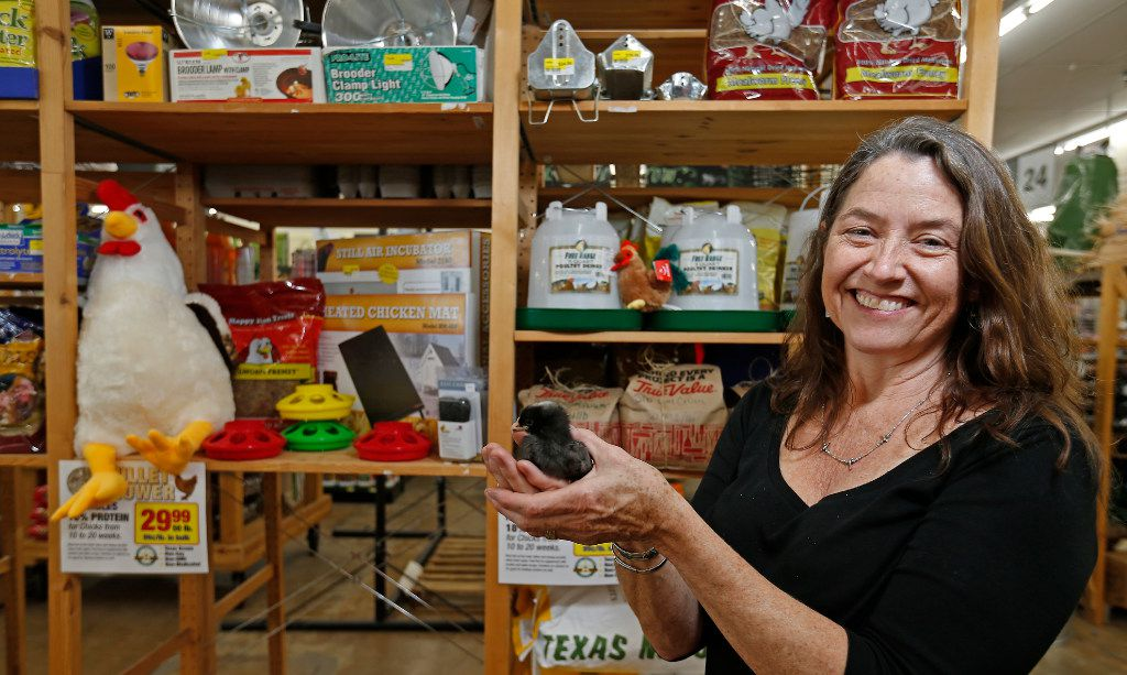 """Owner Sharon """"Boots"""" Anderson poses for a photograph with a baby chick that is for sale at her new Rooster Home & Hardware store in Dallas, Monday, Nov. 28, 2016. The eco-friendly hardware store specializes in urban farming, beekeeping, live chickens, supplies and local products. (Jae S. Lee/The Dallas Morning News)"""