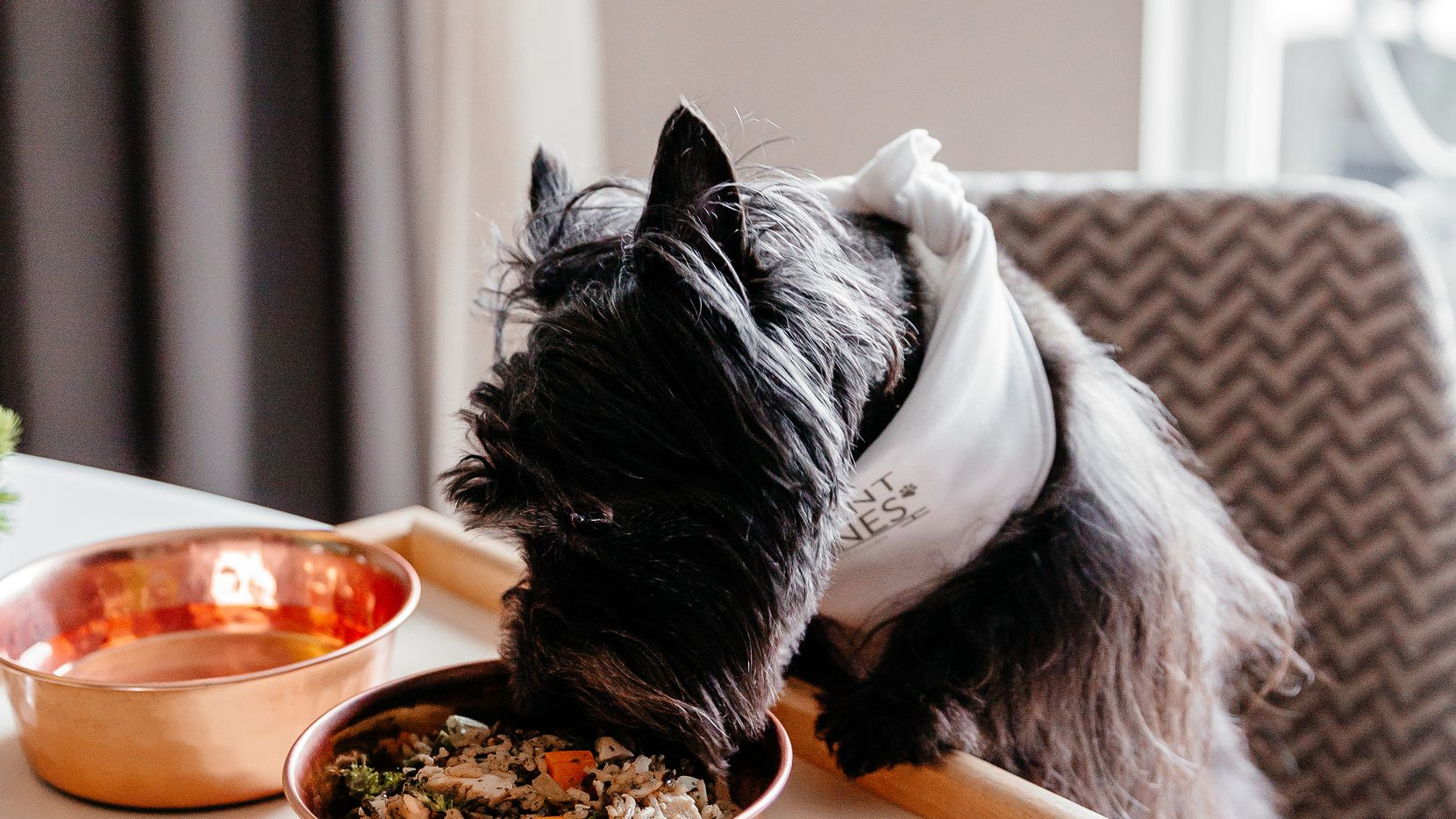 Hotel Crescent Court's pet amenity program includes a doggy menu and bowls.