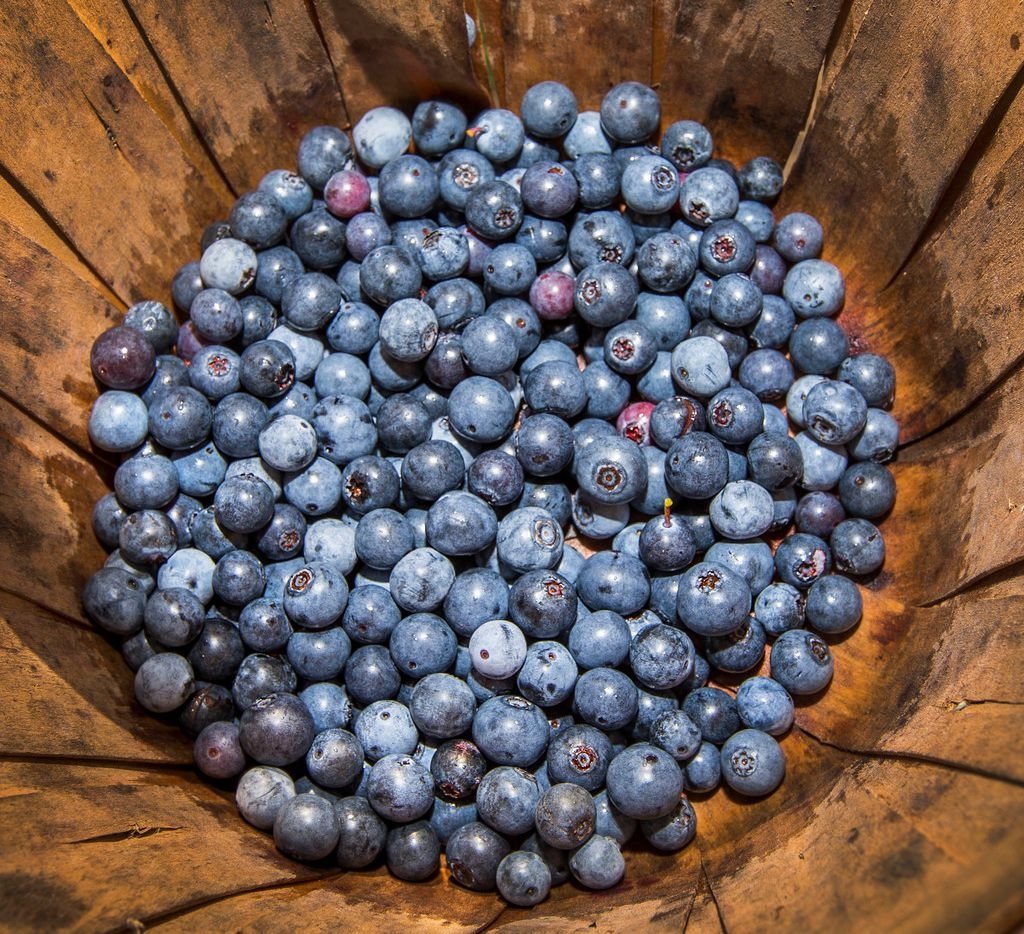 Freshly picked blueberries at Blueberry Hill Farms in Edom on July 7, 2018.