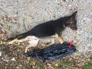 One of many dead dogs found near Dowdy Ferry Road last year. (Facebook)