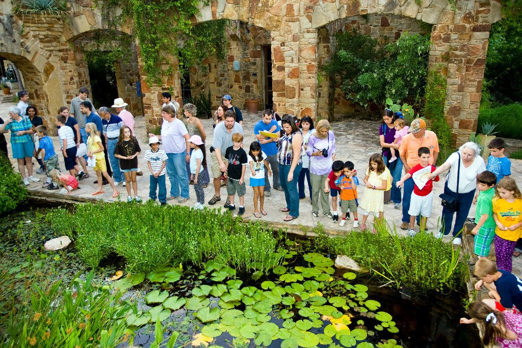 Families search for frogs in the wetland pond at the Lady Bird Johnson Wildflower Center.