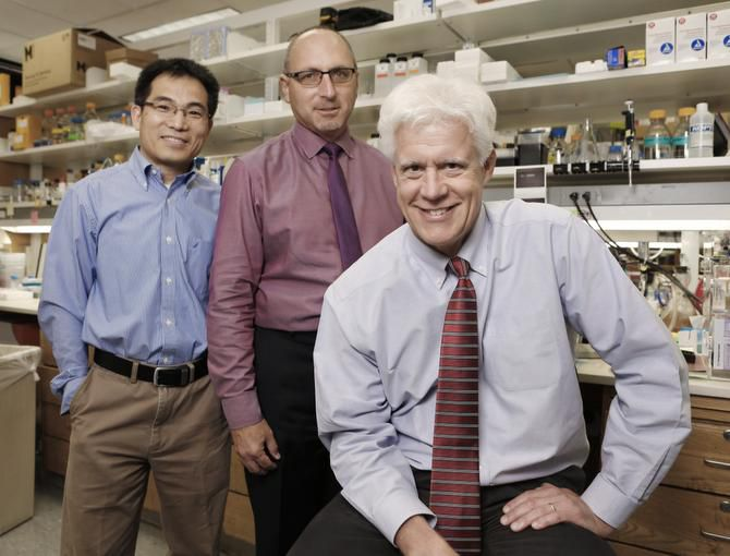 UTSW researchers working to regenerate heart, nerve cells