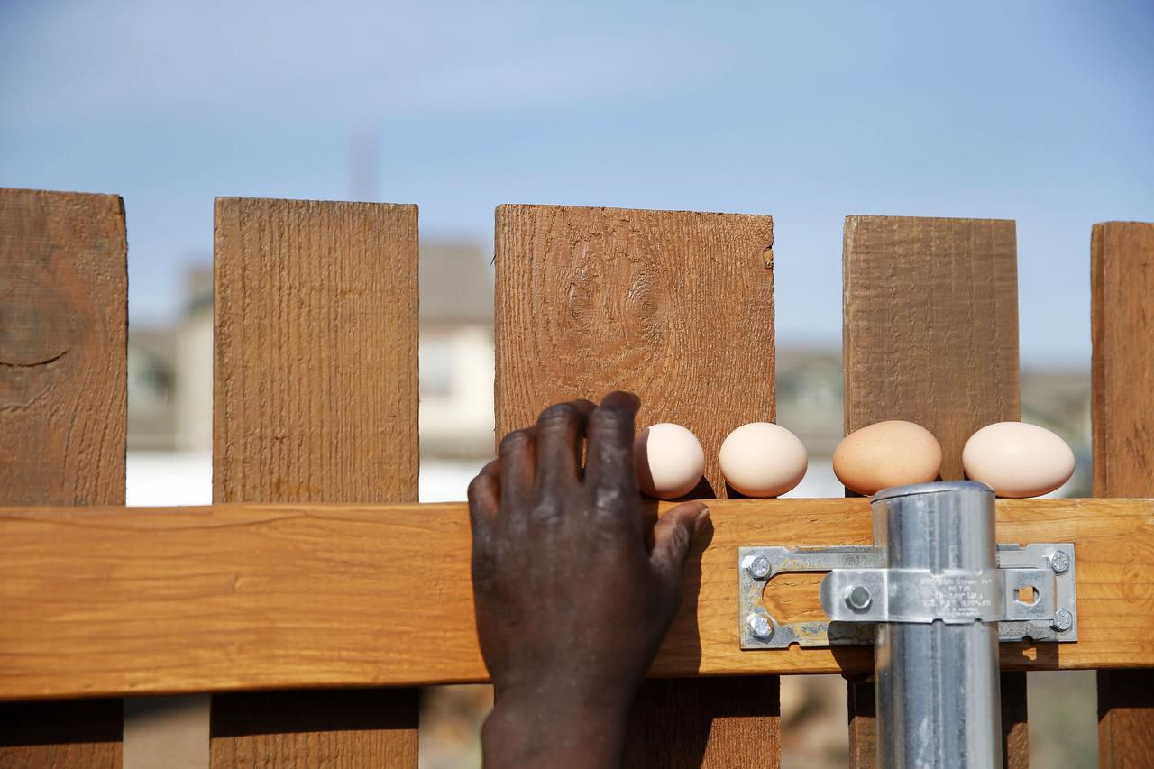Patrick Wright places eggs retrieved from the chicken coop on a fence while he works on Bonton Farm-Works property. Wright oversees the care and feeding of farm animals.