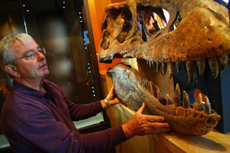 """Rick Rolater, 73, of Denton, was the largest U.S. seller of """"high-end Mongolian and Chinese fossils,"""" government lawyers said in court filings."""