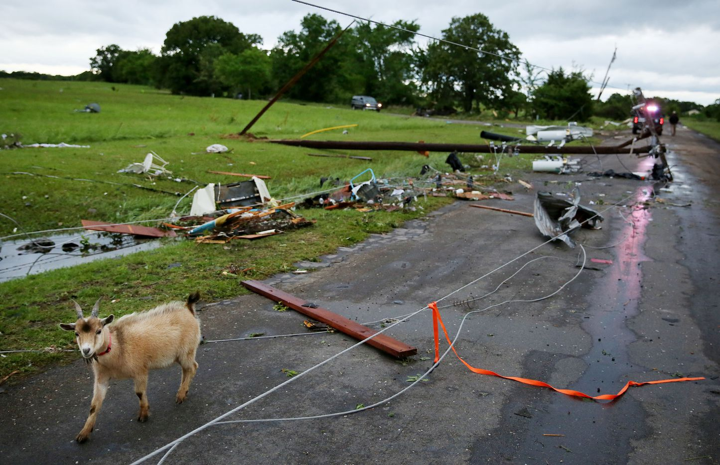 A goat walks along County Road 1910 after a tornado impacted Fruitvale, Texas on Sunday April 30, 2017. Tornadoes whipped through Van Zandt, Henderson and Rains counties Saturday evening with reports of multiple deaths and dozens injured.