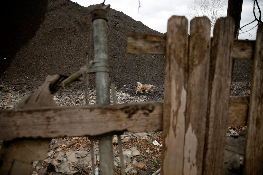 A neighborhood dog wanders through a large hill of used roofing shingles along South Central Expressway.