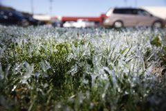 El hielo cubre un jardín en East Dallas, en Abrams Road, la mañana del miércoles. ROSE BACA/DMN