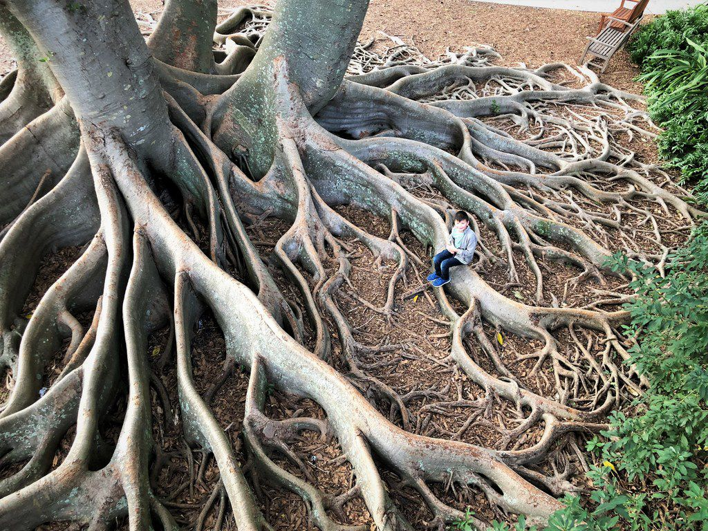 Explore the century-old banyan trees planted by Marie Selby herself at the Marie Selby Botanical Gardens.