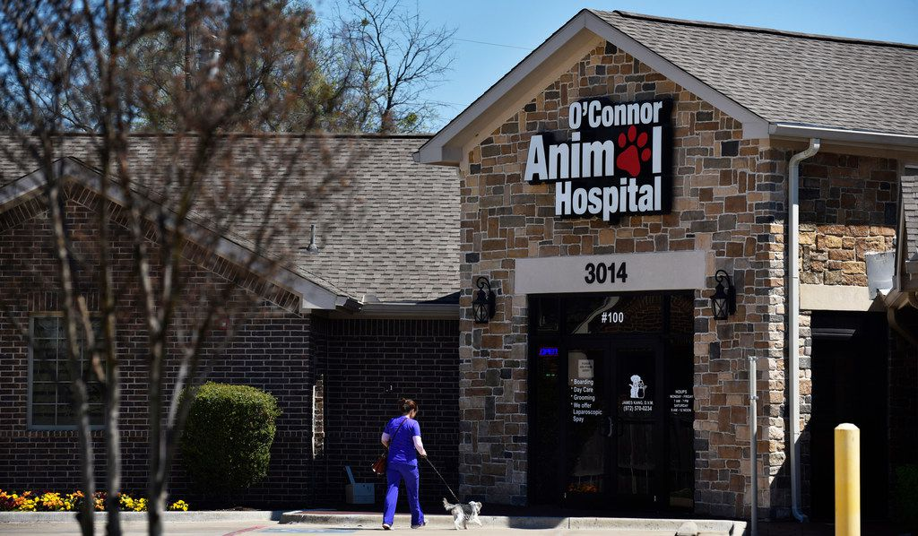 This is the front of the O'Connor Animal Hospital in Irving, where a woman was mauled to death by her pit bulls Saturday.