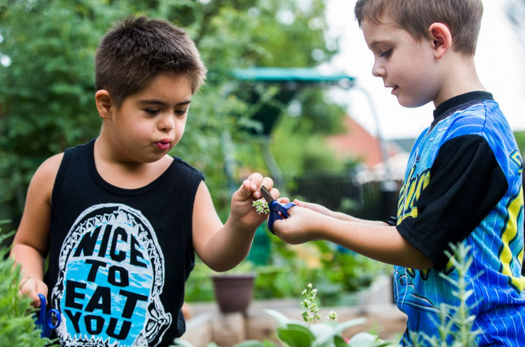 Amir Shamshiri (left), 5, shares a clipping with James Kelly Martin, 4, as preschool students touch, smell and harvest herbs in the garden behind The Orchard School on Independence Way in Plano. Parents banded together to buy and license the school after its corporate owner, KinderCare, shut it down.