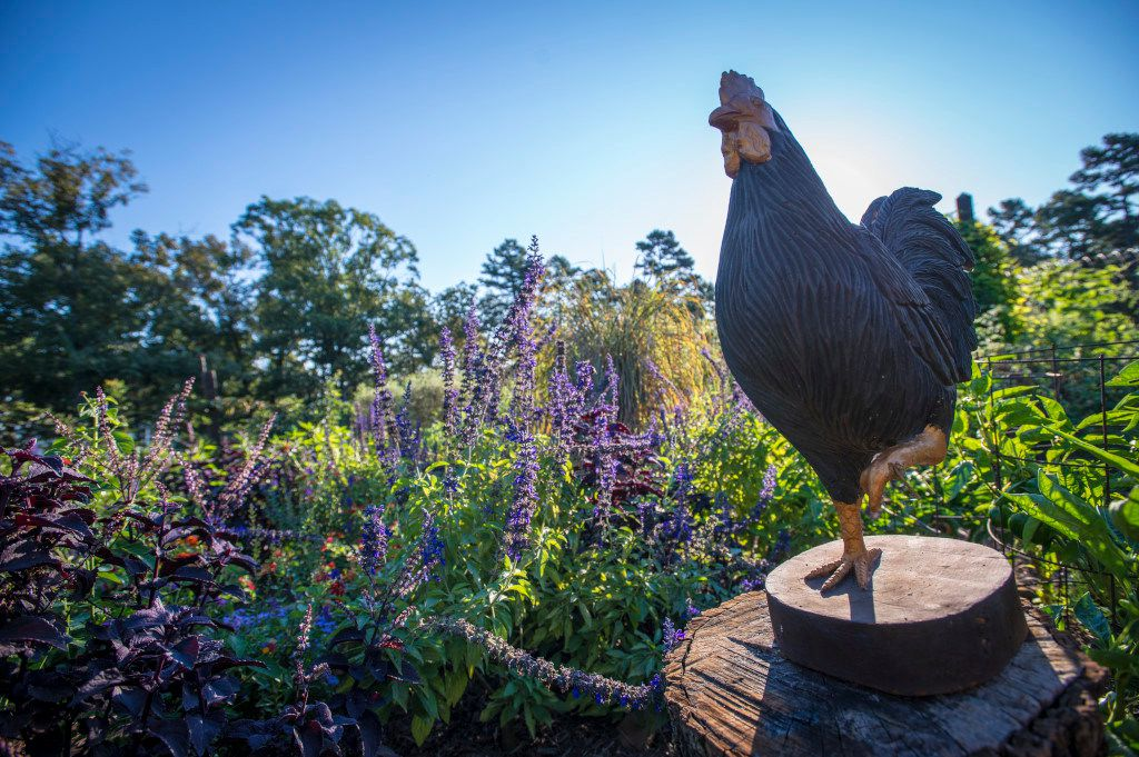 Chickens even have a place in the vegetable garden at P. Allen Smith's Moss Mountain Farm.