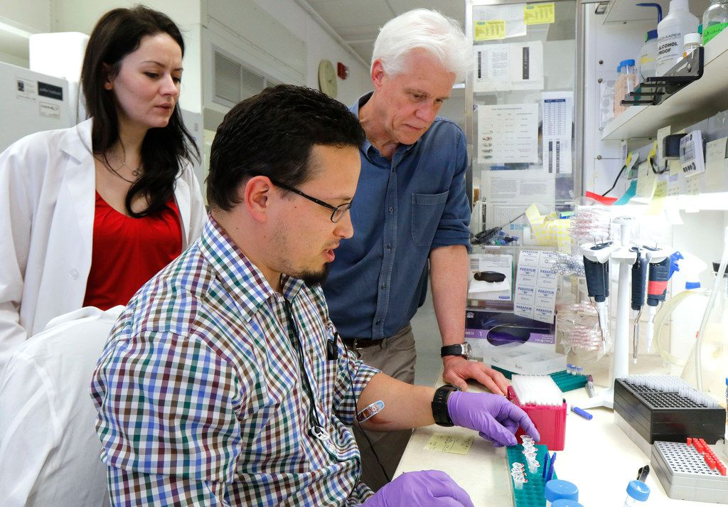 Olson's lab assistant Efrain Sanchez works with protein muscle samples (center) as lab assistant Leonela Amoasii (left) and Olson look on.
