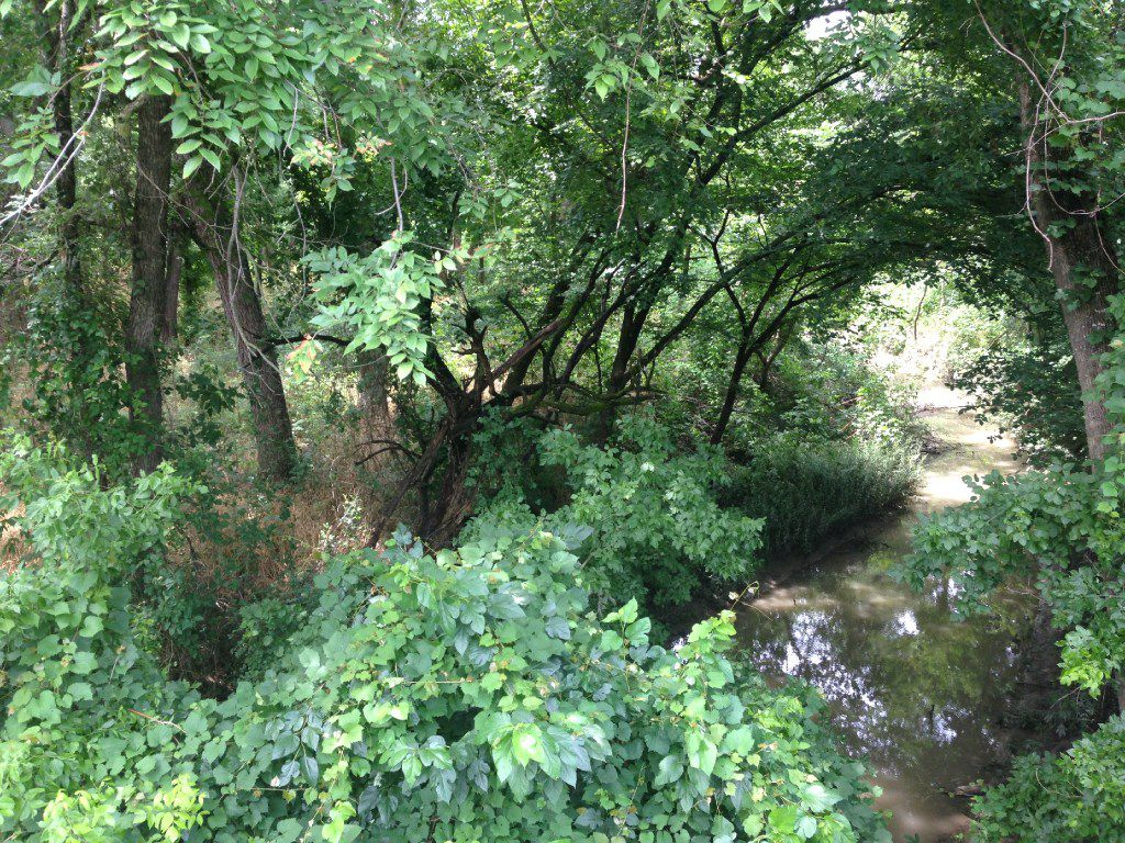 The most densely forested portion of McKinney Entertainment LLC's 17 acres south of ElDorado Parkway is along Wilson Creek which defines, roughly, the western boundary of the property