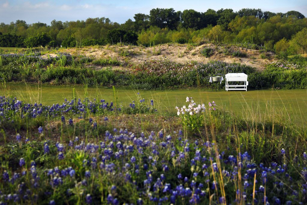 Wildflowers populate a sandy mound near the first tee box at the new Trinity Forest Golf Club in southern Dallas. The course is the new home of the AT&T Byron Nelson golf tournament.