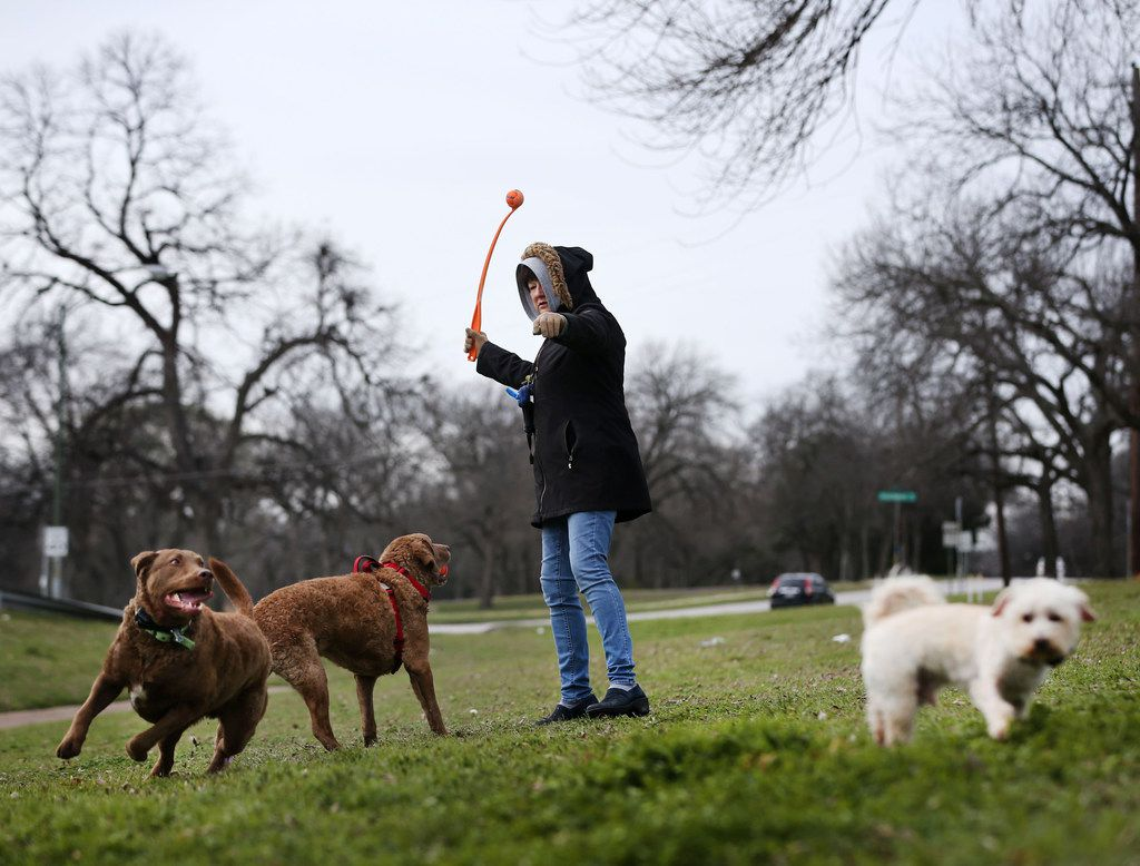 Melanie Wisniewski plays fetch with her dogs (from left) Nibbles, Cassia and Howard in 24-degree weather in East Dallas on Monday morning.