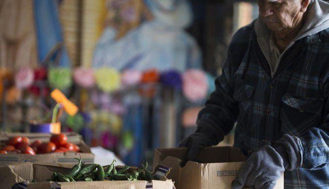 Juan Magaña recoge fruta y vegetales en Casa Guanajuato, organización con sede en Oak Cliff que reparte alimentos gratuitos a personas necesitadas. (ESPECIAL PARA AL DIA/MARIA OLIVAS)