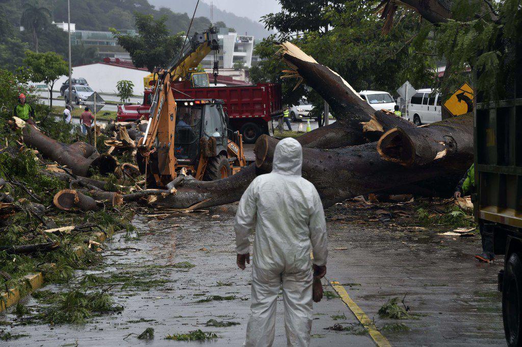 Trabajadores cortan un árbol que mató a un niño después de caer durante una tormenta en Panamá el 22 de noviembre 2016. (AP)