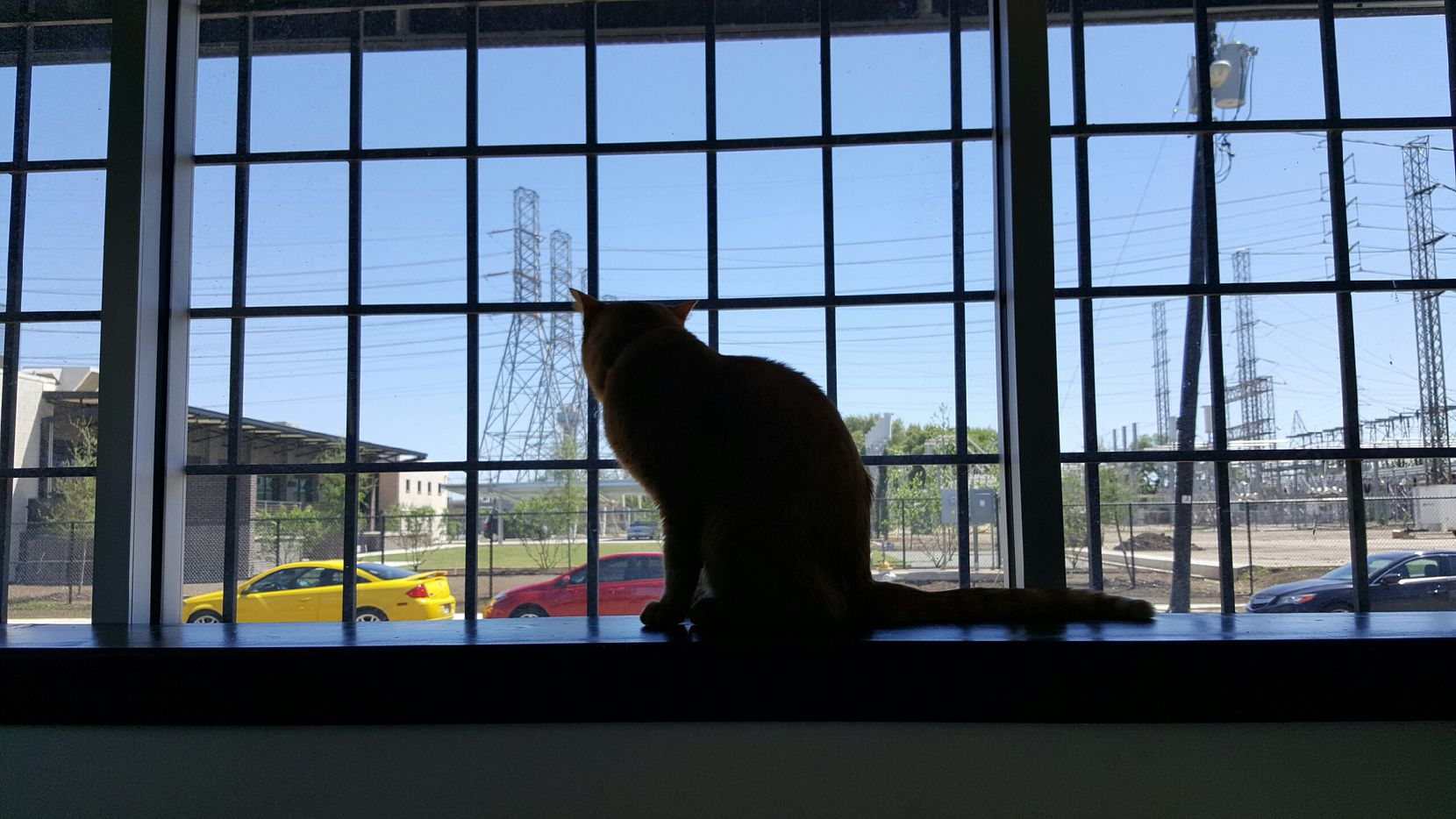 Harvey the cat looks out the window. The cat went missing in June 2016 from his home in Denver and was found March 2 down a 25-foot hole at a construction site near Highland Park.