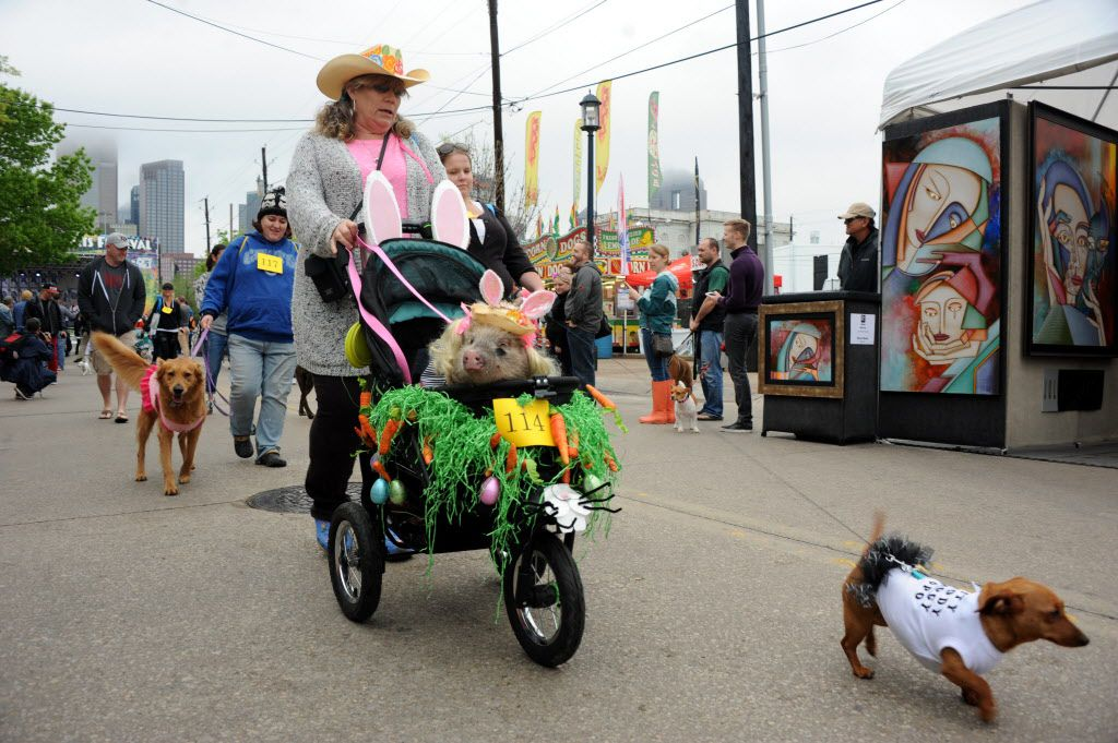 Wrena the pig takes a stroll in the annual pet parade.