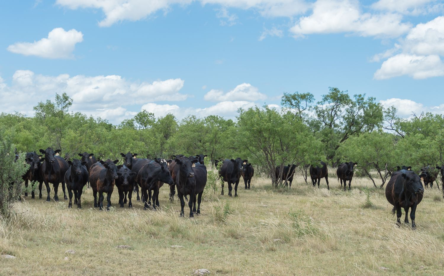 The Comanche Crest Ranch is in Throckmorton County west of Fort Worth.