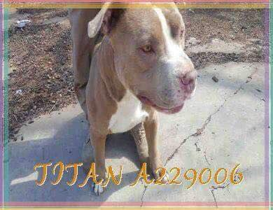 Titan was found dead a day after he was adopted from the Garland Animal Shelter, according to a rescue group.