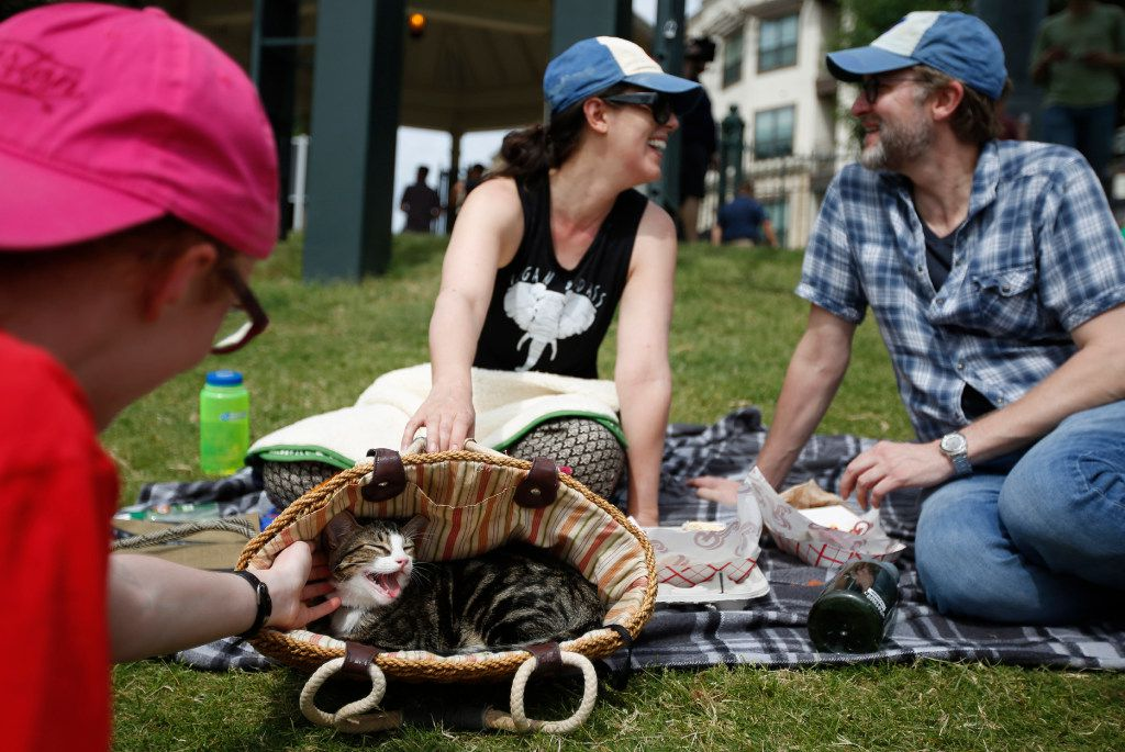 """Angela Barnes and Chad Wynn, background, with cat Schrodinger at """"Take Meow to the Ballgame,"""" a day where cat owners are encouraged to bring their cats to the ballpark at Dr Pepper Ballpark in Frisco, Texas, Sunday, May 21, 2017."""