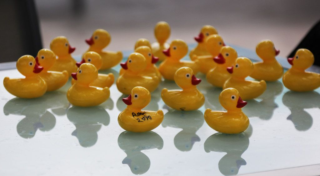 A school of rubber duckies is sighted at JadeWaters, the water park and lazy river at the Hilton Anatole Hotel in Dallas, photographed on Friday, May 26, 2017. (Louis DeLuca/The Dallas Morning News)