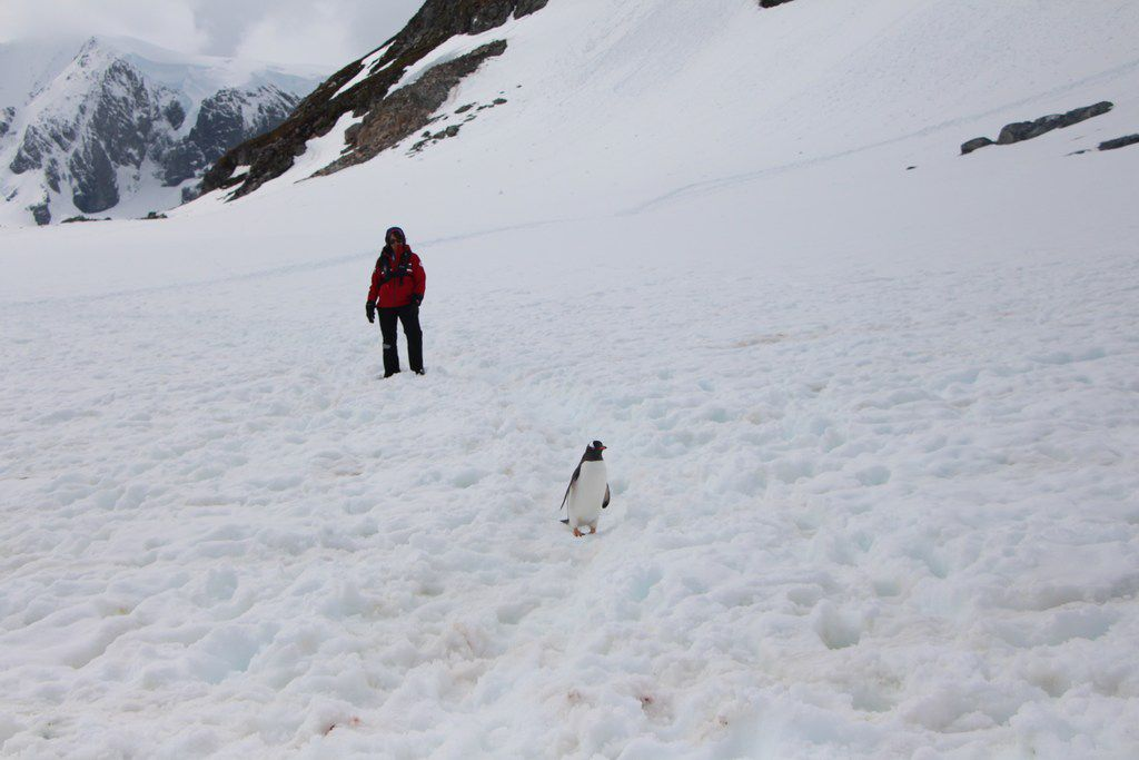 Visitors to Antarctica can have close encounters with penguins and other wildlife.