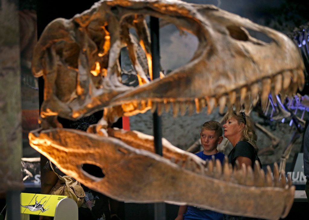 Dawn Dwyer (right) and her 12-year-old son, Jax, get a close look at Tyrannosaurus Rex during a media preview of new dinosaur exhibit Ultimate Dinosaurs at Perot Museum of Nature and Science in Dallas on Thursday, June 21, 2018.