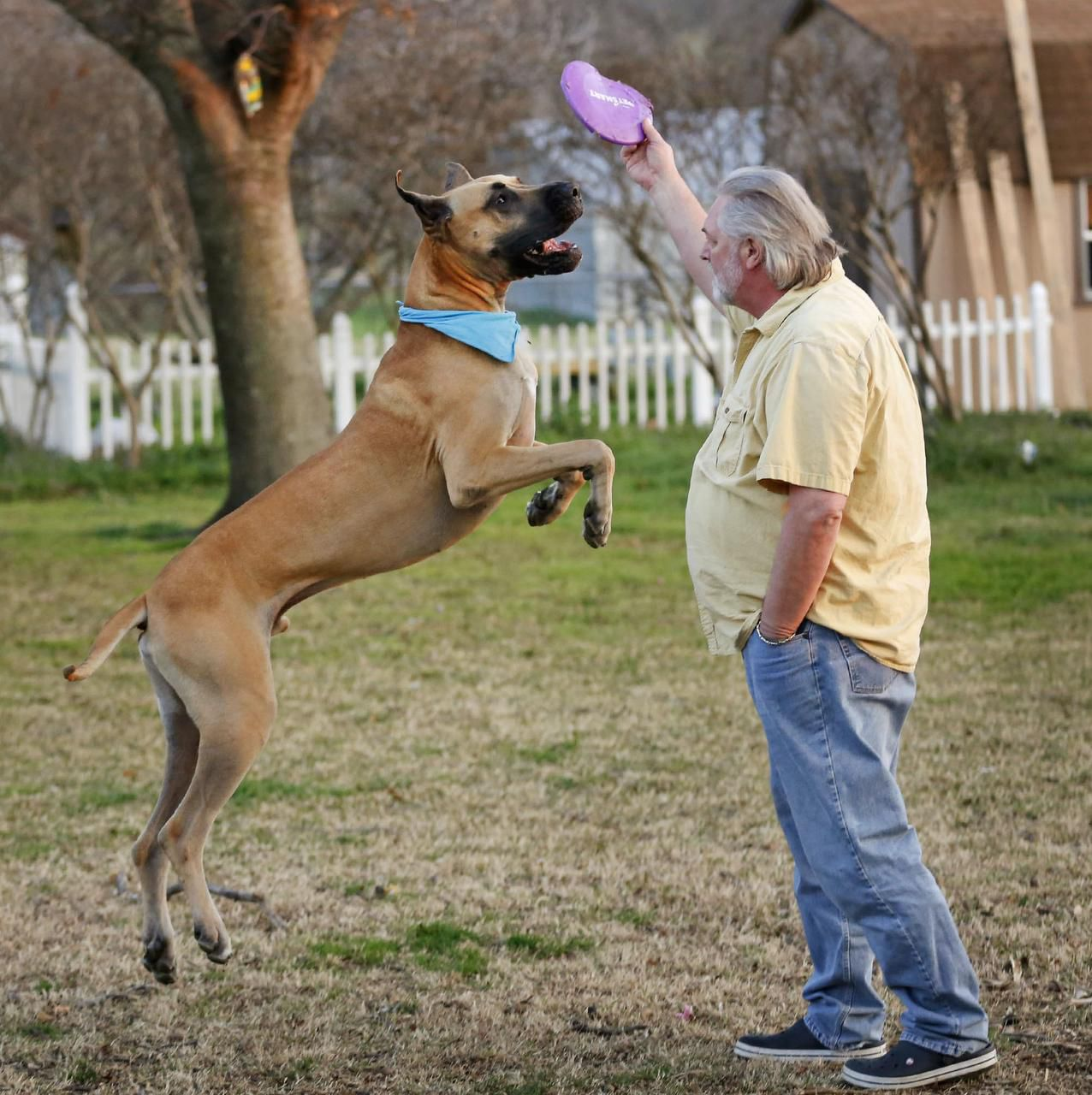 Great Dane from Mesquite to compete in Westminster dog show