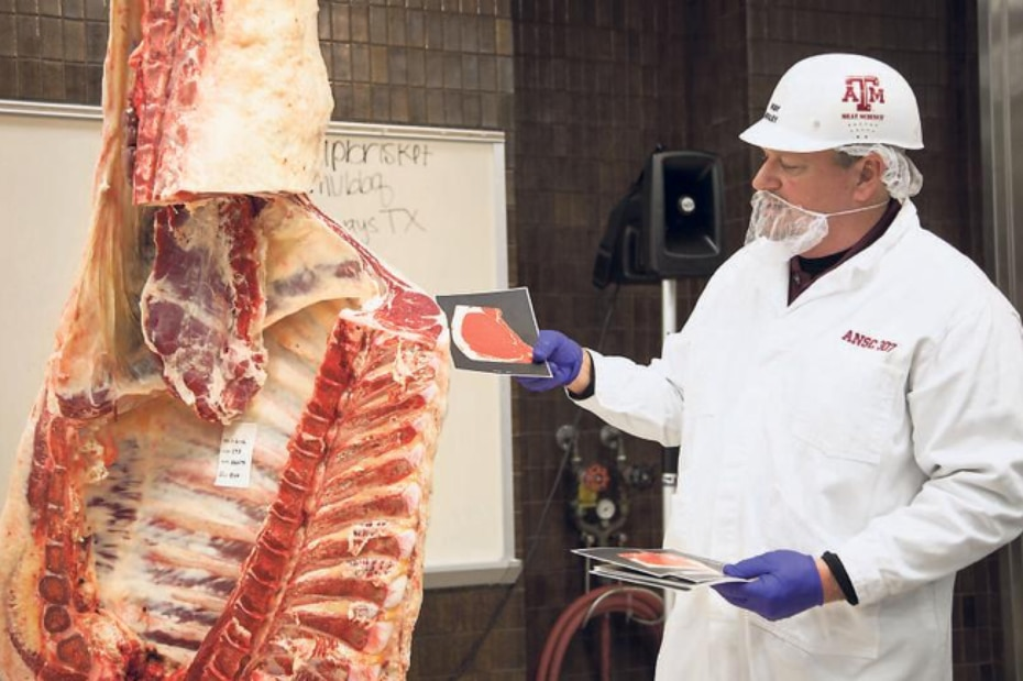 Oh, you're the queasy type? Camp Brisket isn't for you. At one of the sessions, Texas A&M's Ray Riley hauled a cow carcass into the classroom and explains where brisket comes from.