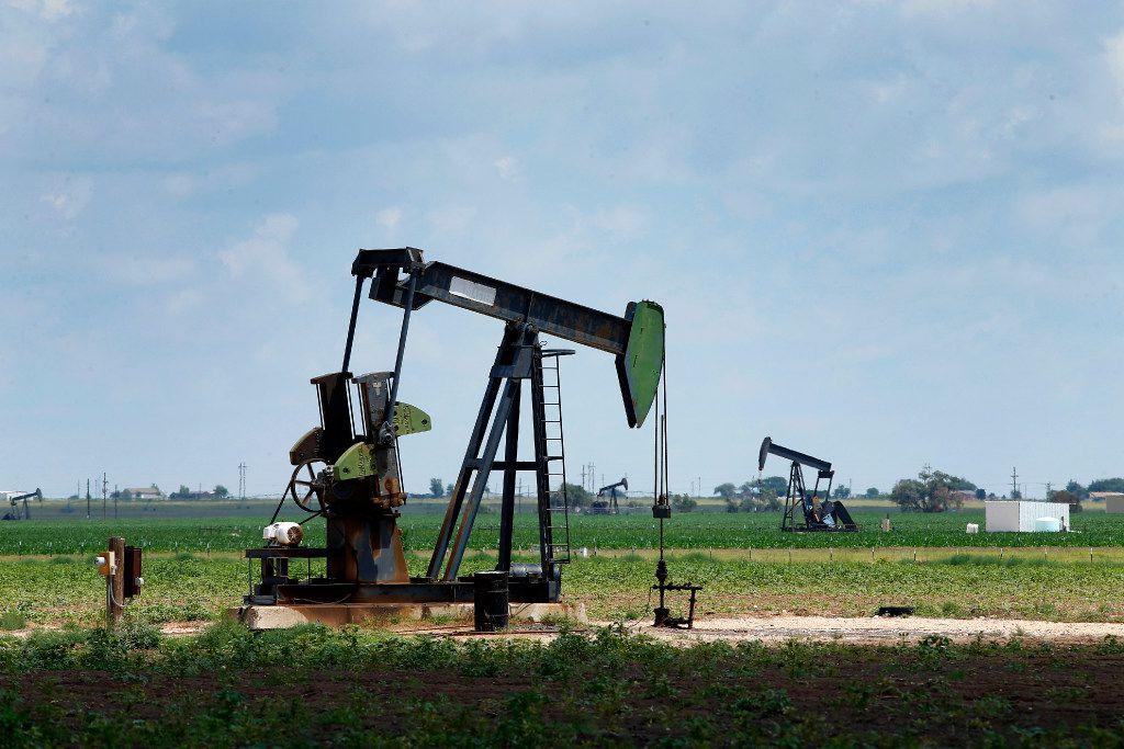 Pump jacks draw oil in cotton fields north of Lubbock.