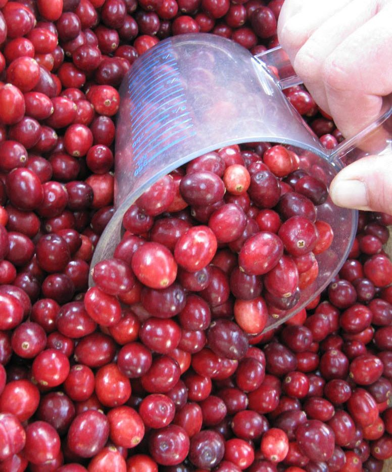 Cranberries make their debut in the fall and are featured at Thanksgiving dinners, but are good for recipes all season. (Rick Nelson/Minneapolis Star Tribune)
