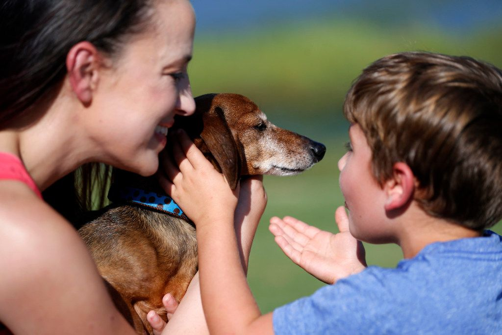 Donna Rosen surprises her son Braxton, 6, with their dog Bobo, who had been missing for over a year, at a park in Denton County on Monday. Bobo went missing in the area over a year ago before Rosen was able to track him down in Oregon.