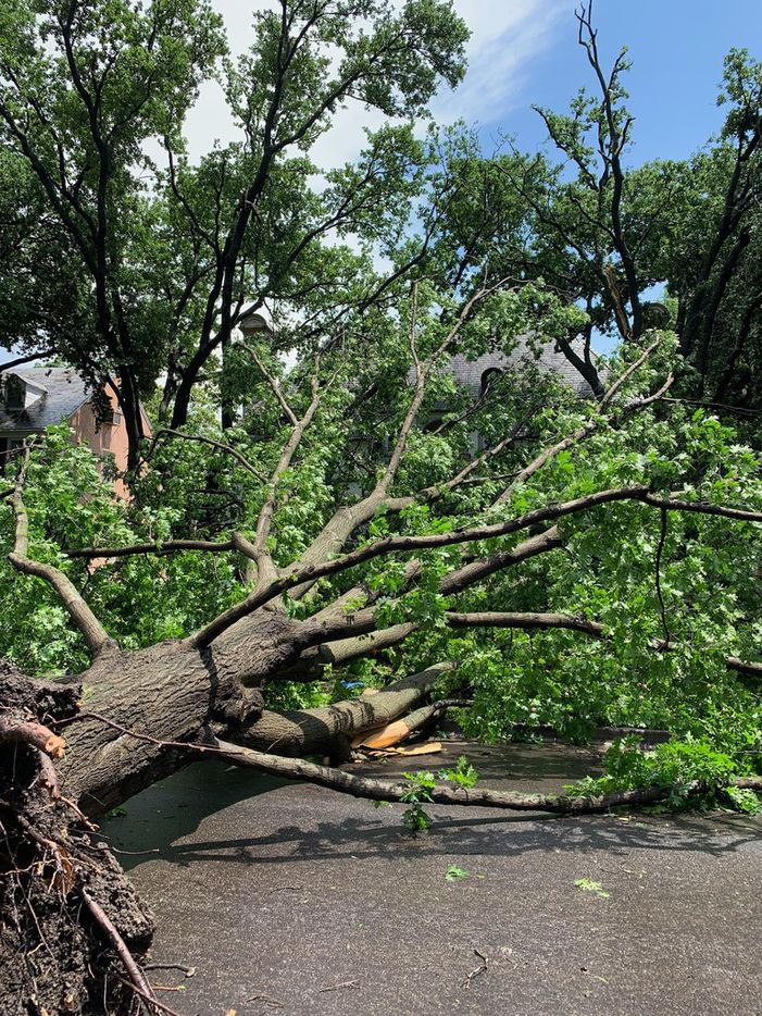 Fallen trees in the  4300 block of Versailles on Sunday, June 9, 2019. (Keith Campbell/The Dallas Morning News)