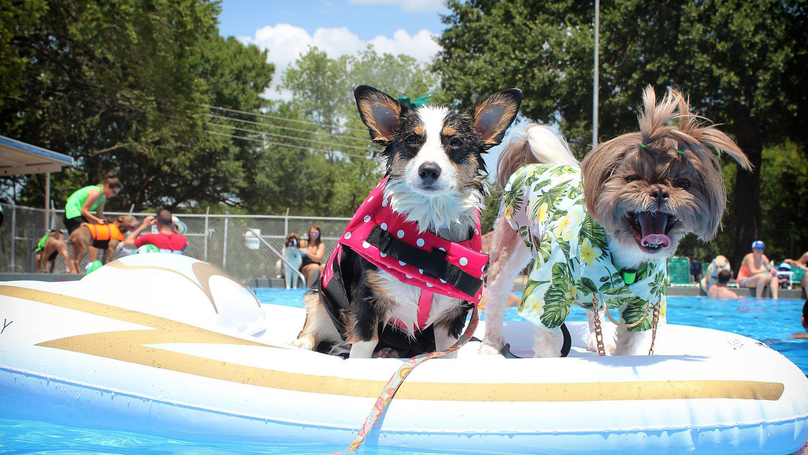Dog About Town: A dating app's launch, a pool party and more