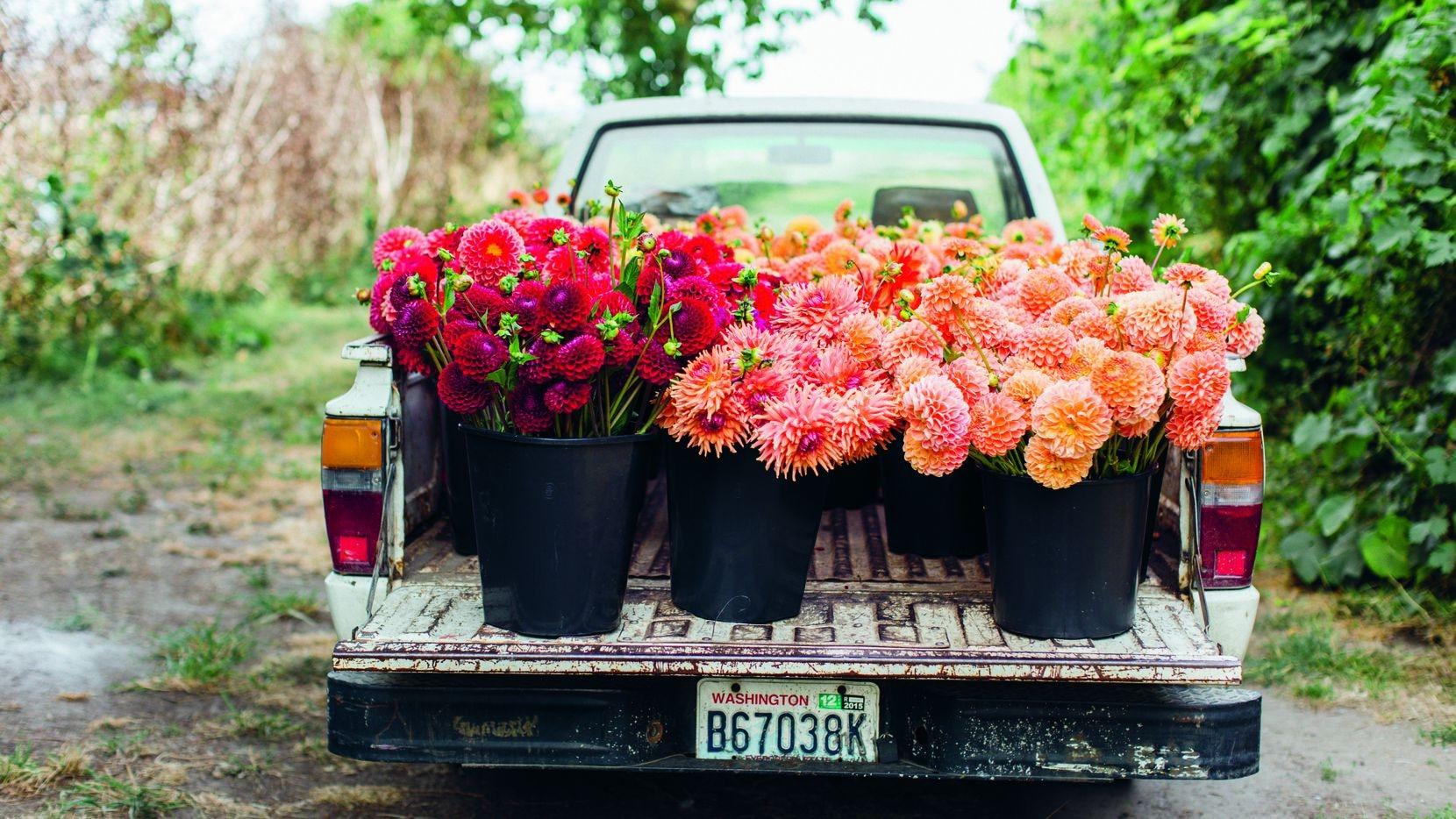 Floret Farm's Cut Flower Garden: Grow, Harvest, and Arrange Stunning Seasonal Blooms  by Erin Benzakein and Julie Chai