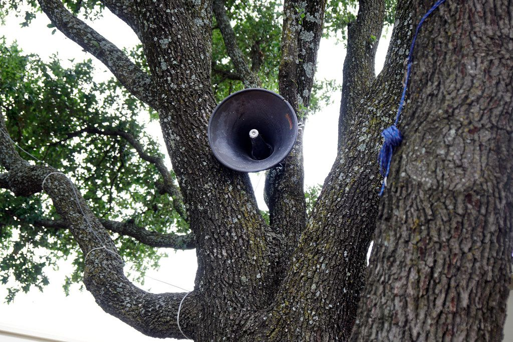 """A speaker nestled in a tree is part of the """"First Amendment Machine"""" at Mountain View College, which runs through May 10."""