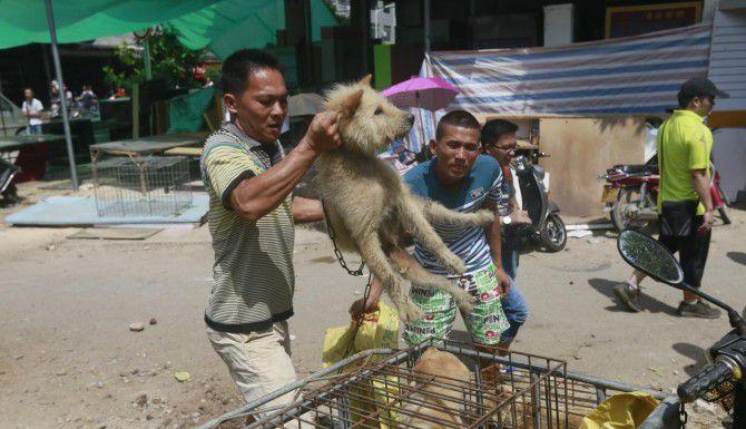 Dos hombres arrojan perros a jailas en el mercado de Yulin, el domingo. Miles de canes mueren durante el festival de carne de perro en Yulin. Muchos son mascotas robadas que son enviadas de varias partes de China para ser vendidos y sacrificados en Yulin. (Human Society International/AP)