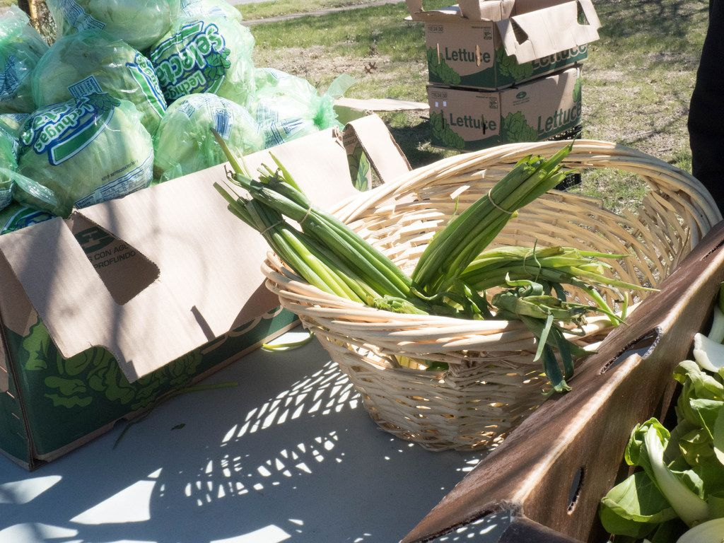 Frech vegetables available for free, provided by The Oak Cliff Veggie Project in Dallas, Saturday, March 16 2019. Each third Saturday of the month this initiative provides fresh vegetables to the community free of charge.