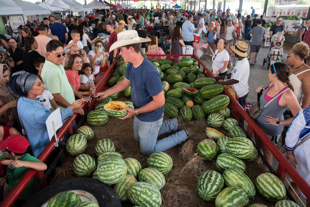 Josh Whitman cuts up samples of watermelons from Baugh Farms in Canton for people attending the Watermelon Festival at the Dallas Farmers Market on Saturday, Aug. 4, 2018.  (Rex C Curry/Special Contributor)