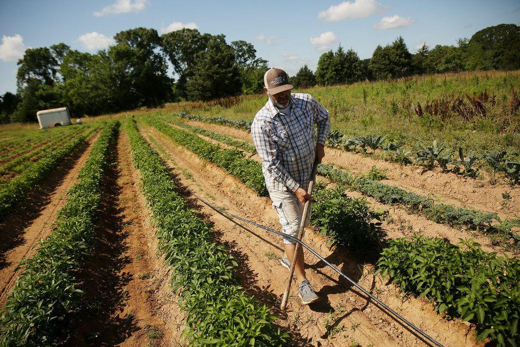 Doug Williams works on transferring irrigation onto pepper plants at Grow It Forward Farm in Edom, Texas.