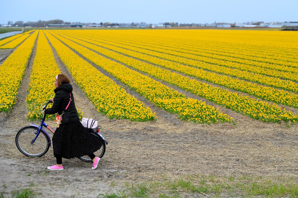 A tourist pushes her bicycle after taking pictures in a field of flowers in Lisse, Netherlands. Dutch farmers are trying to prevent visitors from trampling their flowers.