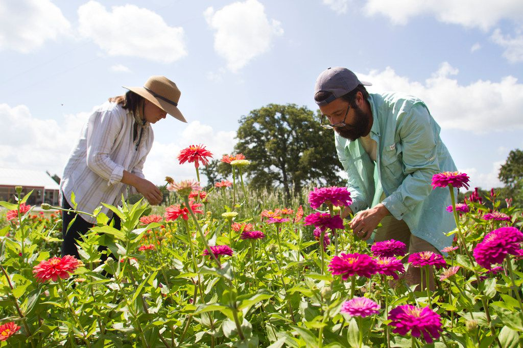 Owners Aelish and David Lascoe tend to zinnias in the field at Tin Cup Farm in Buffalo, Texas.