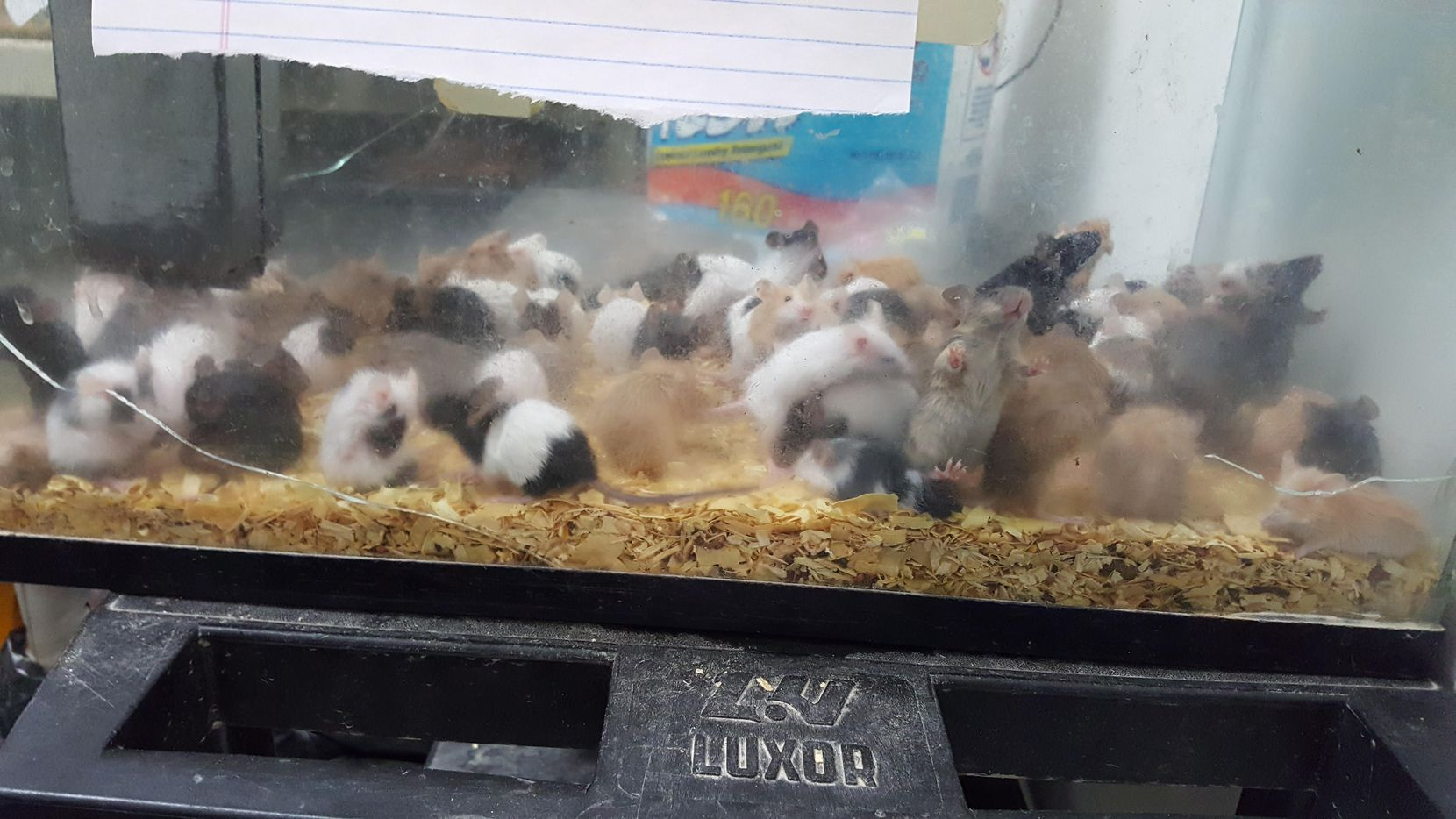 More than 80 small acquariums with rats and mice were removed from a small room at the back of the store. A dozen animals were dead, Animal Services Manager Mindy Henry told the Cleburne Times-Review.