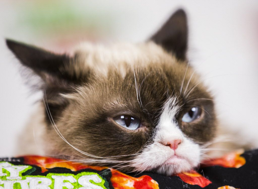 Grumpy Cat made an appearance at SXSW on Sunday.