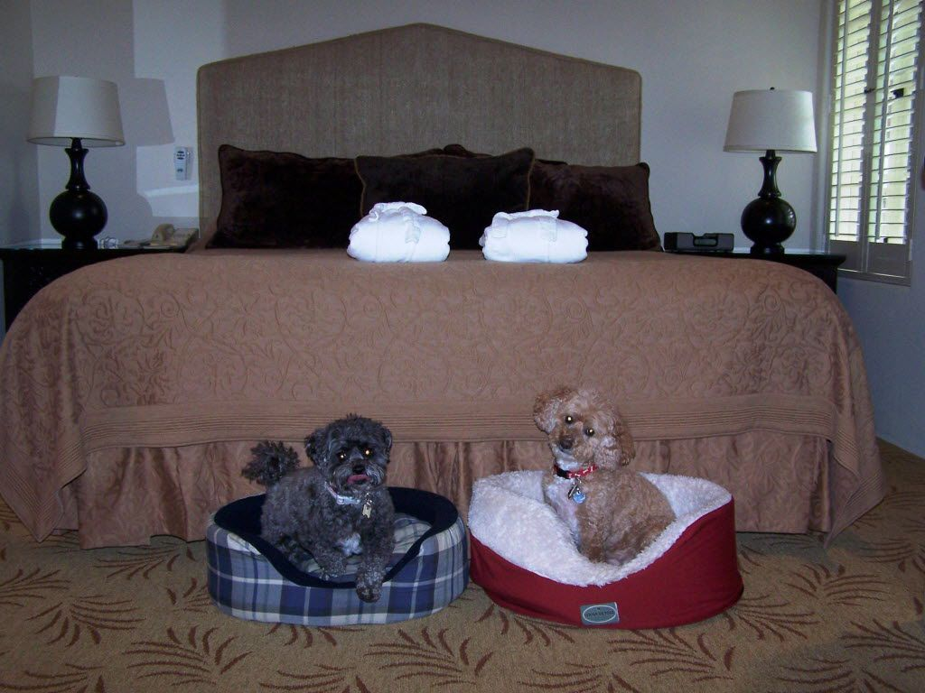 Misty (left) and Daisy settle down in their beds during a stay at the Cypress Inn in Carmel-by-the-Sea, California. Co-owned by actress Doris Day, the hotel welcomes dogs of all sizes to stay in the rooms and dine at the on-site restaurant.
